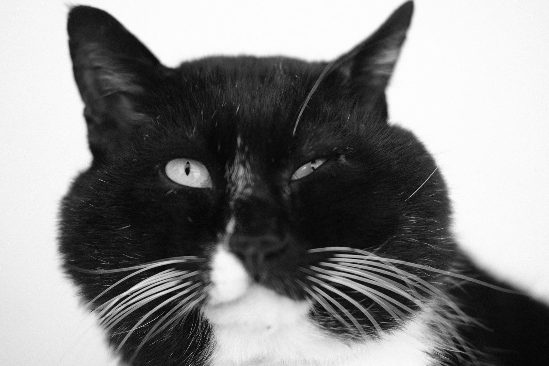 佐柳島のネコはよい展